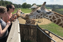 Aubrey and Jessica feed giraffes during the 2018 lab trip to Six Flags.